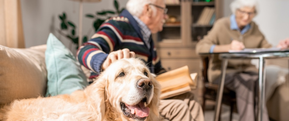 Pet Trusts Estate Planning Miami Florida Attorney